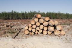 Entrando uma floresta imagens de stock