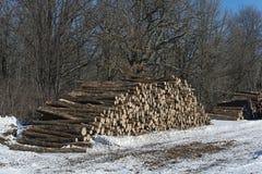 Entrando uma floresta central de Minnesota Imagem de Stock Royalty Free