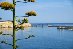 Entrata al grande porto con il fiore dell'agave sulla priorità alta Immagini Stock Libere da Diritti