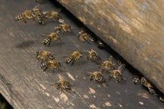 Entrata dell'alveare dell'ape Fotografie Stock