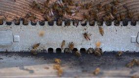 Entrata di apicoltura stock footage
