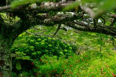 Entre árboles e hierbas Imágenes de archivo libres de regalías