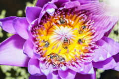 Entre abejas Fotos de archivo libres de regalías
