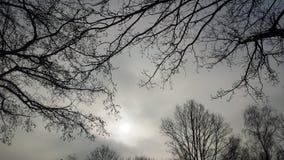 Entre as árvores fotos de stock royalty free