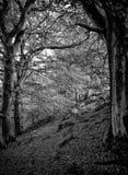 Entre deux arbres photo libre de droits