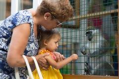 Entre en contacto con el parque zoológico, abuela con los nietos miran animales Fotografía de archivo