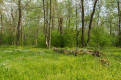 Entre a floresta Imagem de Stock Royalty Free