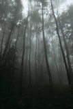 Entre a floresta nevoenta e abundante em Tailândia Foto de Stock Royalty Free