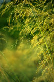 Entre hierba Fotos de archivo