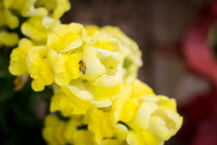 Entre la fleur Photo libre de droits