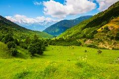 Entre las altas montañas del Cáucaso paste las vacas fotos de archivo