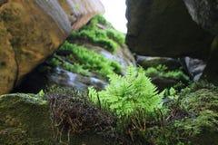Entre las rocas Fotografía de archivo