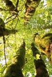Entre les arbres Photo stock