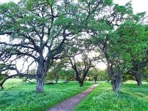 Entre les arbres Photos libres de droits