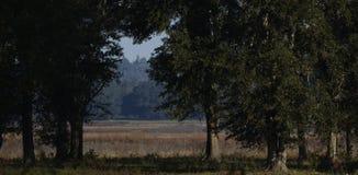 Entre les arbres et ce qui se trouve au-delà Photos stock