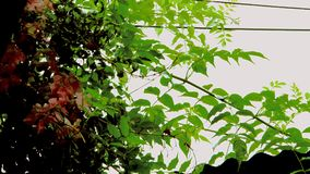 Entre les câbles noirs et les branches vertes Photo stock