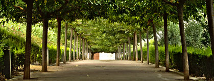 Entre los árboles imagenes de archivo