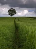 Entre los campos de la cebada Fotografía de archivo libre de regalías