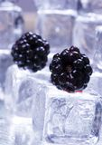 Entre los cubos de hielo Fotografía de archivo