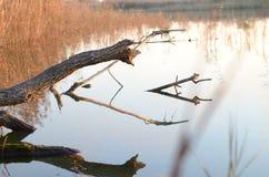 Entre o rio Fotografia de Stock Royalty Free