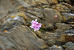 Entre rochas Imagem de Stock
