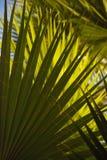 Entrecruzamento verde das frondas da palma através da imagem Fotografia de Stock