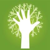 Entrega a árvore Fotografia de Stock Royalty Free