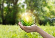 Entrega o globo de proteção da árvore verde no fundo tropical do verão da natureza imagem de stock royalty free
