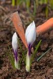 Entrega a remoção de ervas daninhas do jardim Fotografia de Stock Royalty Free