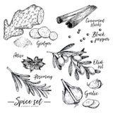 Entregue as ervas, especiarias tiradas e os condimentos ajustados Vector ícones do gengibre, da canela, do anis, do azeite, dos a ilustração do vetor