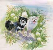 Entregue cães tirados na natureza, ilustração da aquarela ilustração royalty free