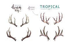 Entregue chifres tirados dos cervos da aquarela com os ramalhetes tropicais da flor Folhas de palmeira exóticas, árvore da selva, Imagem de Stock