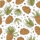 Entregue cones e pinhões do pinho do desenho no fundo branco Fotos de Stock