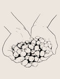 Entregue a esboço tirado muitas cerejas vermelhas do café nas mãos, vetor ilustração stock