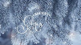 Entregue a escrita do texto branco da rotulação da caligrafia da animação do Feliz Natal snowly no fundo dos ramos do abeto para  filme