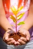 entregue guardar e plantar a árvore nova com fundo da natureza Imagem de Stock