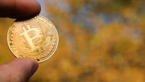 Entregue guardar a moeda de ouro de Bitcoin e a árvore amarela do outono no fundo Foto de Stock