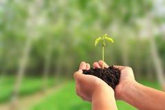 Entregue guardar a planta nova com solo no fundo da árvore do borrão fotografia de stock