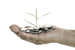 Entregue guardar uma árvore nova que cresce em moedas no fundo branco Fotografia de Stock Royalty Free