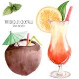 Entregue a ilustração tirada da aquarela o cockt tropico tropical exótico imagem de stock royalty free