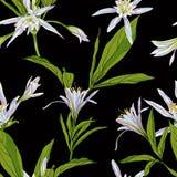 Entregue lírios tirados das flores em um fundo branco sem emenda Foto de Stock