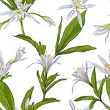 Entregue lírios tirados das flores em um fundo branco sem emenda Foto de Stock Royalty Free