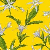 Entregue lírios tirados das flores em um fundo branco sem emenda Imagens de Stock Royalty Free