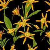 Entregue lírios tirados das flores em um fundo branco sem emenda Imagens de Stock