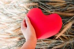 Entregue levantam delicadamente acima o coração vermelho da flor da grama para o fundo do conceito do amor e do careness Fotografia de Stock Royalty Free