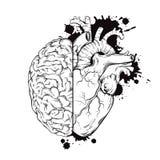 Entregue a linha arte tirada halfs do cérebro humano e do coração Projeto da tatuagem da tinta do esboço do Grunge na ilustração  Imagens de Stock Royalty Free