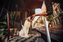 Entregue a menina que afaga um gato bonito em uma cadeira na rua Atmosfera, peru fotos de stock