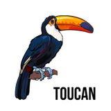 Entregue o assento tirado em um ramo de árvore, ilustração do tucano do vetor Fotografia de Stock Royalty Free
