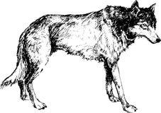 Entregue o lobo tirado com linha e marcador da pena Foto de Stock Royalty Free