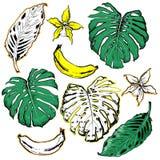 Entregue o motriz tirado com a banana tropical e das folhas de palmeira no branco ilustração do vetor